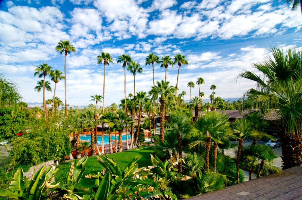 Palm trees overhanging the pool at Caliente Tropics